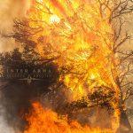 Inter-Arma-sulphur-english-cover