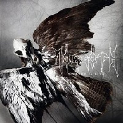 "MORGOTH: ""Body Count"" von ""Cursed To Live"" online"