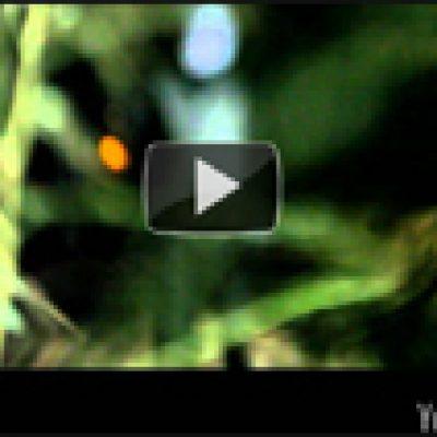 VILDHJARTA : Video zu ´Benblåst´